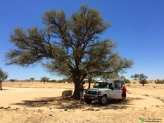 Enjoying lunch under a camelthorn tree