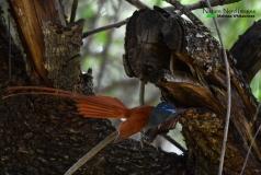 Mr. flycatcher