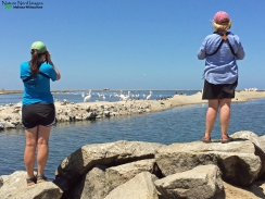 Mom and I birding at the oystercatcher spot