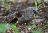 Foraging in the leaf litter