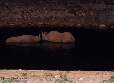 Mother and calf at the waterhole