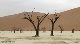 The amazing Deadvlei