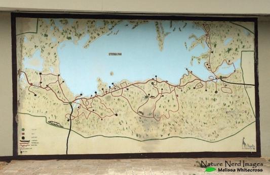Map of Etosha at the lodge