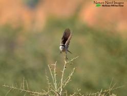 Herero Chat 3 - Spitskoppe Namibia