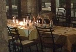 Black-backed jackal on the dinner table