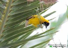 More nest building