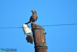 Purple roller on a telephone pole