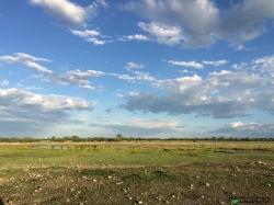 Rietfontein waterhole