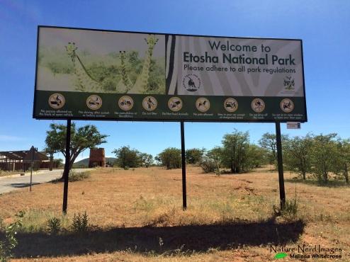 Welcome to Etosha!