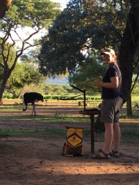Melissa braaiing with Mr. Ostrich at Marakele National Park