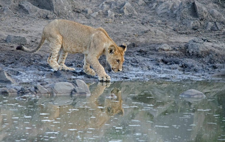 A cautious approach to the water