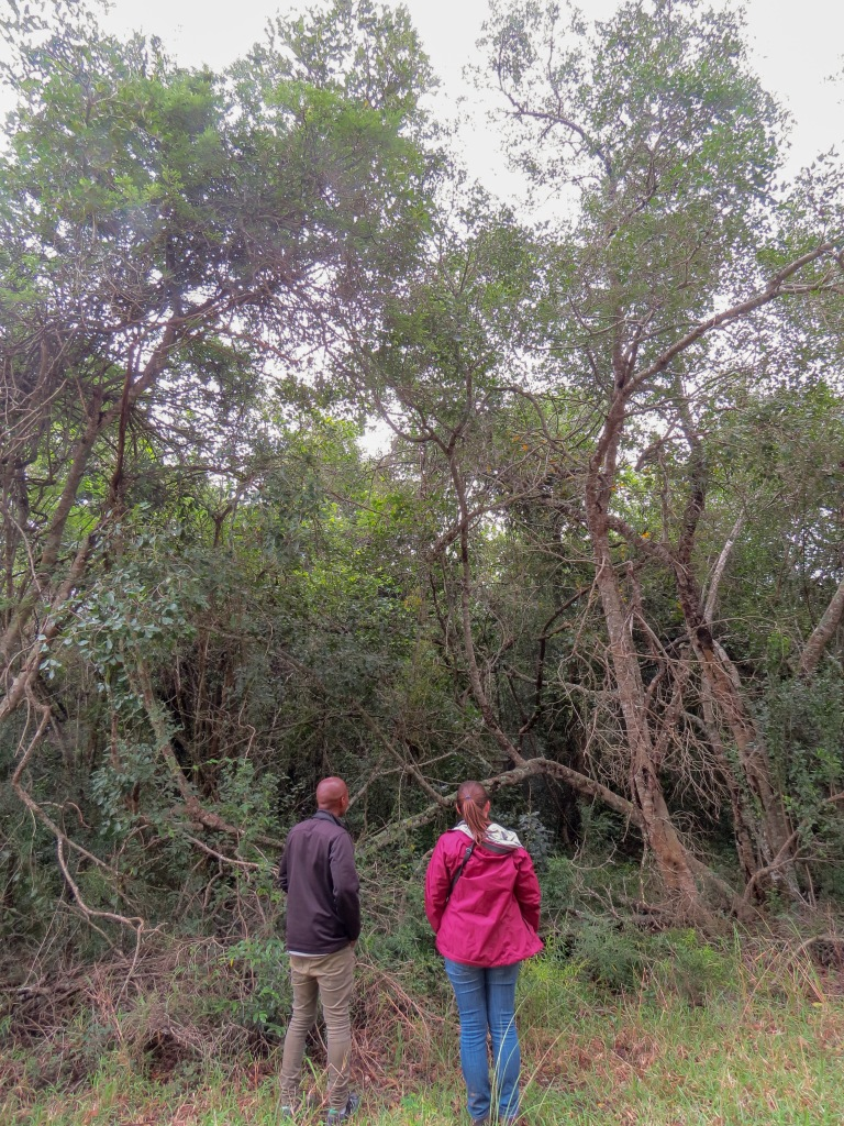 Junior and Caroline Surveying Forest Patches - Kwambonambi, KZN